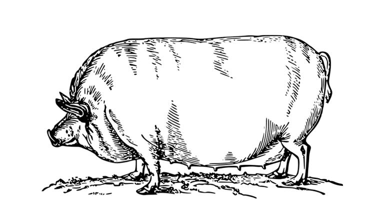 Pork Farms in Ottawa