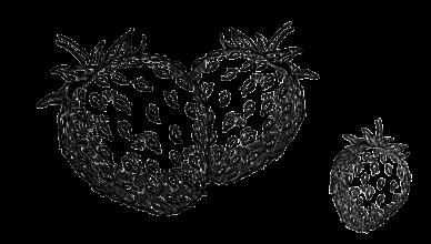 Strawberry Farms in Ottawa